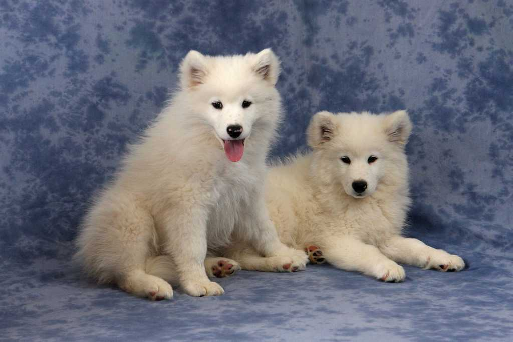 080209-Puppies