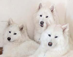 Sophie, Tessa, Fena